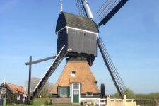Den Hartog riet - Onderhoud rieten dak molen te Hoornaar