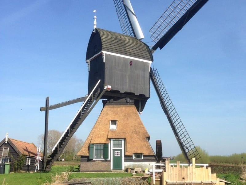 Den Hartog riet - Onderhoud rietendak molen in Hoornaar