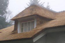 Den Hartog riet - Villa te Zeist